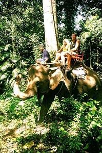 elefantentrekking