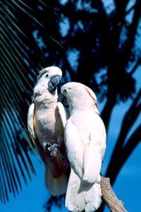 Parrots-Singapore-16