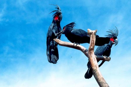 Parrots-Singapore-25