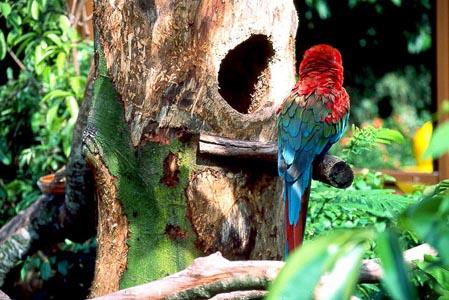 Parrots-Singapore-8