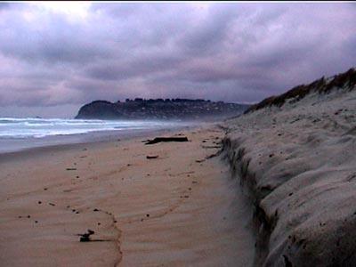 walking the deserted beach in Dunedin