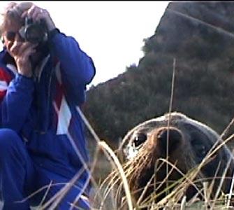 seal_photo