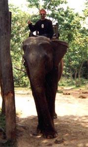 56rick_elephant
