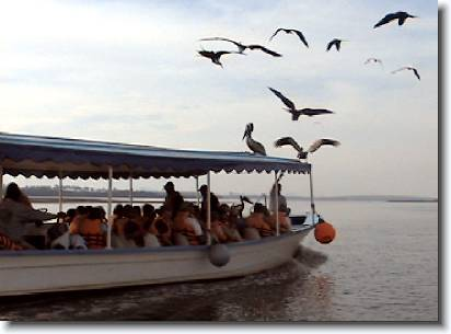 36boat_birds