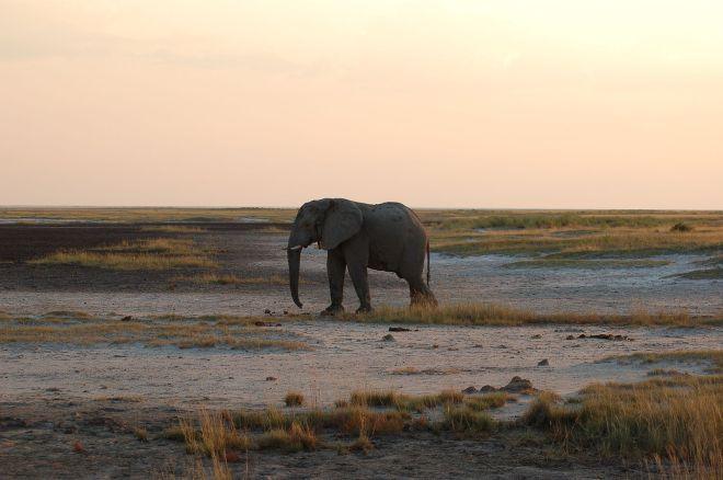 Safari Park Hotel Contacts