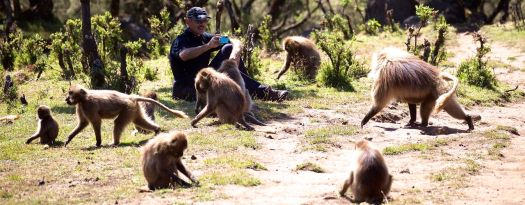 Simien - Rick baboons