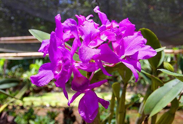 nat flower
