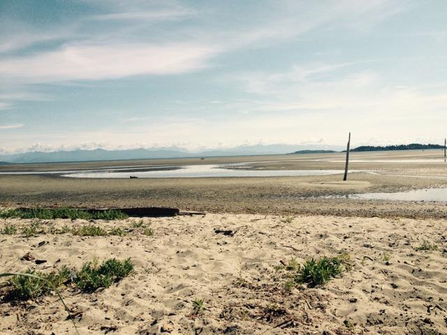incredible low tide